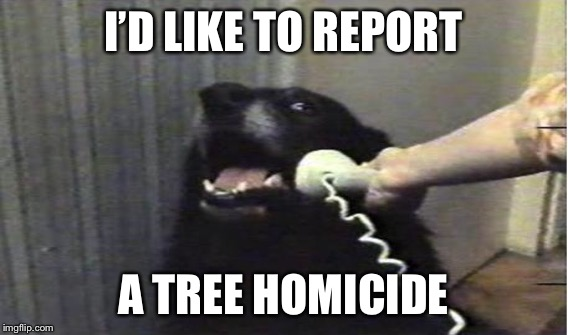 I'D LIKE TO REPORT A TREE HOMICIDE | made w/ Imgflip meme maker