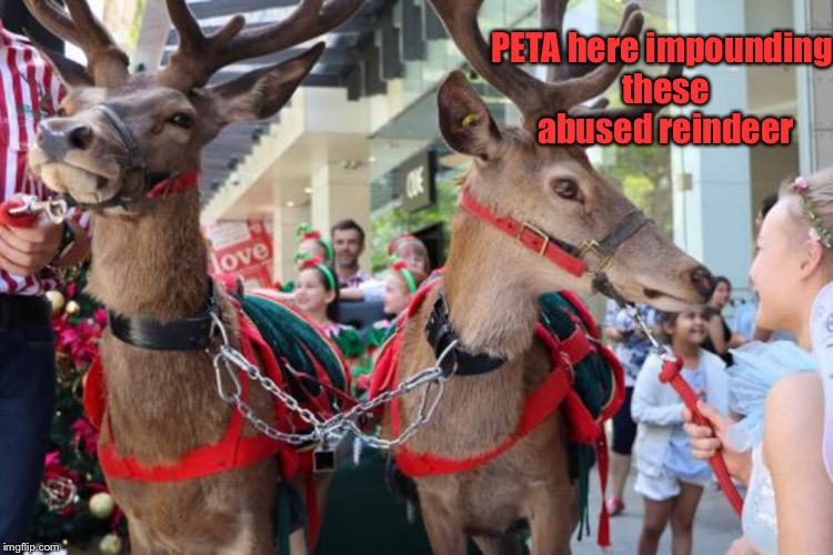 And that's how PETA stole Christmas | PETA here impounding these abused reindeer | image tagged in memes,peta,reindeer,cancel christmas,impound | made w/ Imgflip meme maker