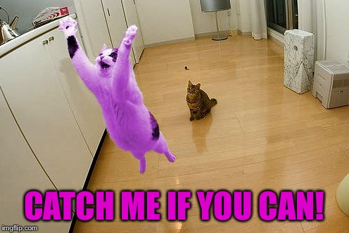 RayCat save the world | CATCH ME IF YOU CAN! | image tagged in raycat save the world | made w/ Imgflip meme maker