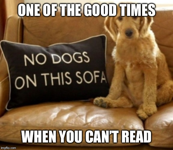 Dogs are brainy! | ONE OF THE GOOD TIMES WHEN YOU CAN'T READ | image tagged in dogs,sofas | made w/ Imgflip meme maker