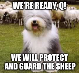 Guarding The Sheep |  WE'RE READY, Q! WE WILL PROTECT AND GUARD THE SHEEP | image tagged in proud sheepdog,q,guard,dog,protect,sheep | made w/ Imgflip meme maker