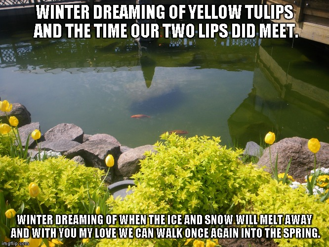 Winter Dreaming | WINTER DREAMING OF YELLOW TULIPS AND THE TIME OUR TWO LIPS DID MEET. WINTER DREAMING OF WHEN THE ICE AND SNOW WILL MELT AWAY AND WITH YOU MY | image tagged in winter,dreaming,tulips,yellow tulips,love | made w/ Imgflip meme maker