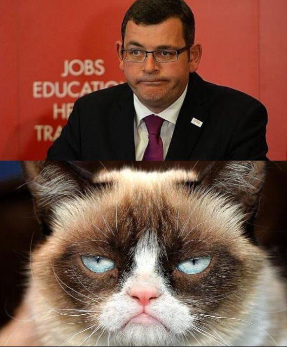 grumpy cat meme generator - 568×687