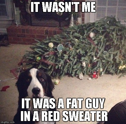 somebody broke in last night | IT WASN'T ME IT WAS A FAT GUY IN A RED SWEATER | image tagged in dog christmas tree | made w/ Imgflip meme maker