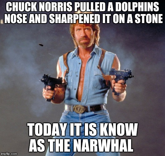 Chuck Norris Guns Meme | CHUCK NORRIS PULLED A DOLPHINS NOSE AND SHARPENED IT ON A STONE TODAY IT IS KNOW AS THE NARWHAL | image tagged in memes,chuck norris guns,chuck norris | made w/ Imgflip meme maker