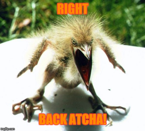 Unpleasant Bird | RIGHT BACK ATCHA! | image tagged in unpleasant bird | made w/ Imgflip meme maker