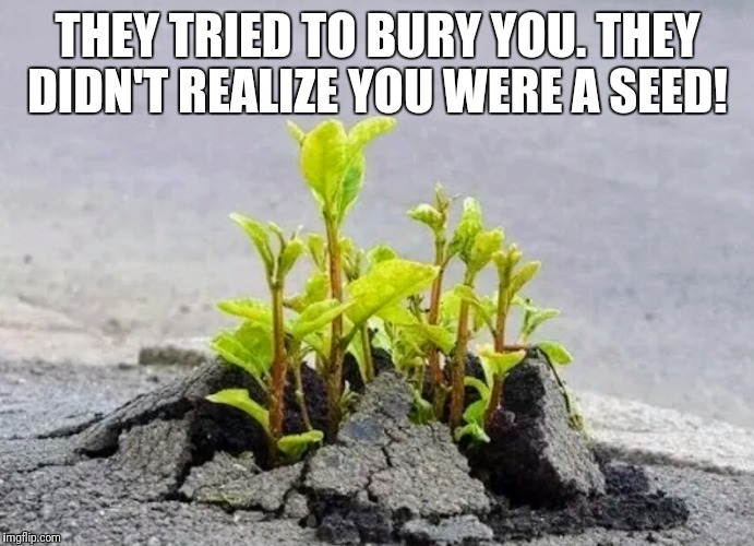 THEY TRIED TO BURY YOU. THEY DIDN'T REALIZE YOU WERE A SEED! | image tagged in seeds | made w/ Imgflip meme maker