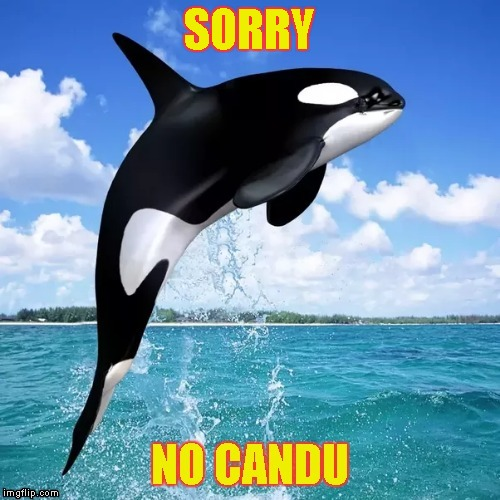 Killer Whale | SORRY | image tagged in memes,orca whale,killer whale,shamu,mamu,candu | made w/ Imgflip meme maker