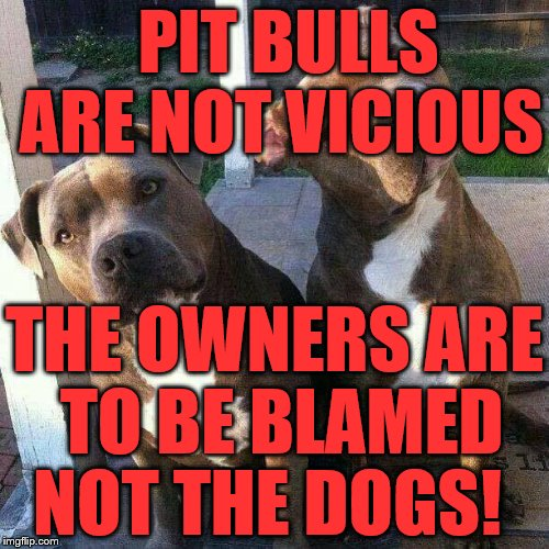 PIT BULLS ARE NOT VICIOUS THE OWNERS ARE TO BE BLAMED NOT THE DOGS! | image tagged in pit bulls | made w/ Imgflip meme maker