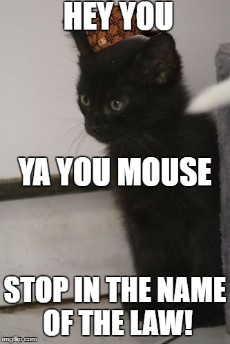 HEY YOU STOP IN THE NAME OF THE LAW! YA YOU MOUSE | image tagged in staring cat mouse,scumbag | made w/ Imgflip meme maker