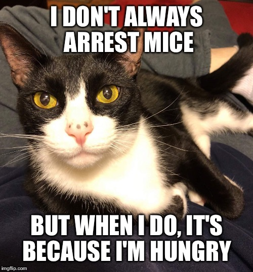 Interesting Cat | I DON'T ALWAYS ARREST MICE BUT WHEN I DO, IT'S BECAUSE I'M HUNGRY | image tagged in interesting cat | made w/ Imgflip meme maker