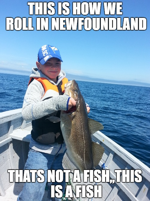 THIS IS HOW WE ROLL IN NEWFOUNDLAND THATS NOT A FISH,,THIS IS A FISH | image tagged in big fish,boy,fishing,nice one,cod,newfoundland | made w/ Imgflip meme maker