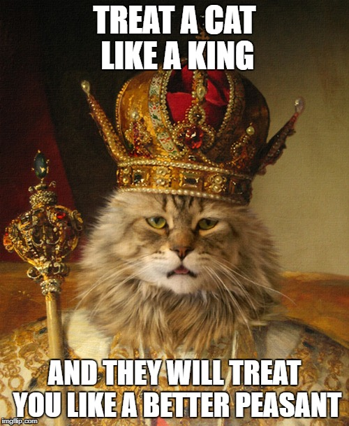TREAT A CAT LIKE A KING AND THEY WILL TREAT YOU LIKE A BETTER PEASANT | image tagged in cats,funny | made w/ Imgflip meme maker