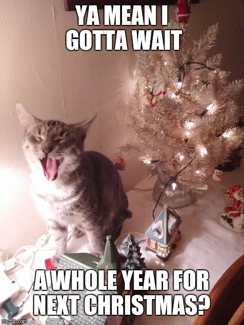 YA MEAN I GOTTA WAIT A WHOLE YEAR FOR NEXT CHRISTMAS? | image tagged in nooooo | made w/ Imgflip meme maker