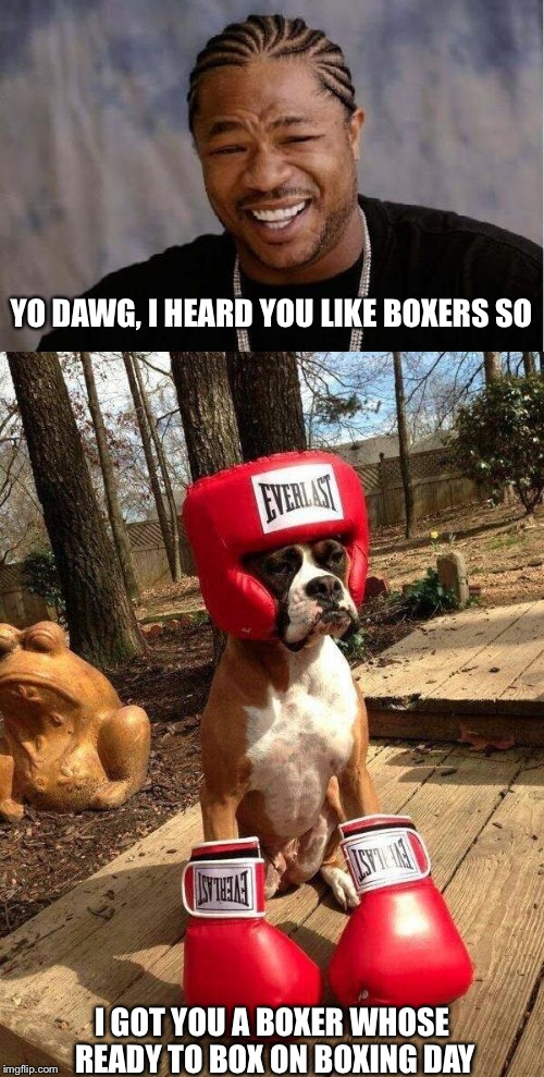 K-9 KO. | YO DAWG, I HEARD YOU LIKE BOXERS SO I GOT YOU A BOXER WHOSE READY TO BOX ON BOXING DAY | image tagged in memes,boxer,boxing day | made w/ Imgflip meme maker