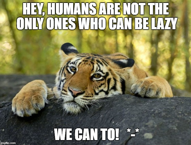 HEY, HUMANS ARE NOT THE ONLY ONES WHO CAN BE LAZY WE CAN TO!   *-* | image tagged in tried trid tiger | made w/ Imgflip meme maker