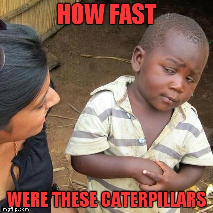 Third World Skeptical Kid Meme | HOW FAST WERE THESE CATERPILLARS | image tagged in memes,third world skeptical kid | made w/ Imgflip meme maker