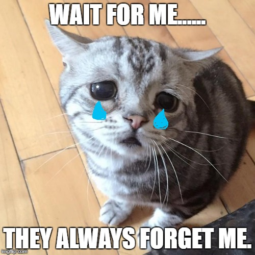 wait for me | WAIT FOR ME...... THEY ALWAYS FORGET ME. | image tagged in lonely cat | made w/ Imgflip meme maker
