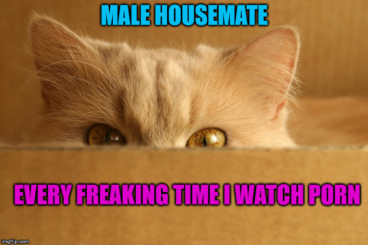 We get it, you're straight, move along | MALE HOUSEMATE EVERY FREAKING TIME I WATCH PORN | image tagged in stalker cat,porn | made w/ Imgflip meme maker