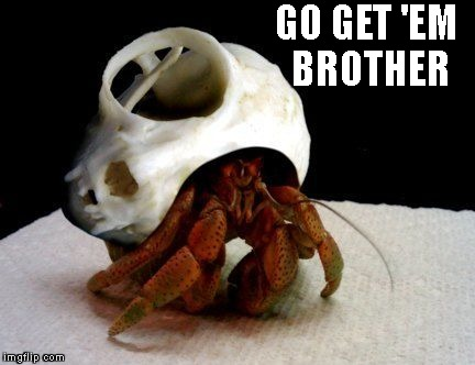 GO GET 'EM BROTHER | image tagged in cat skull crab | made w/ Imgflip meme maker