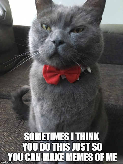 SOMETIMES I THINK YOU DO THIS JUST SO YOU CAN MAKE MEMES OF ME | image tagged in cat | made w/ Imgflip meme maker