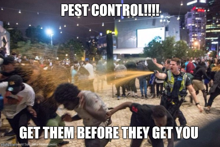 PEST CONTROL!!!! GET THEM BEFORE THEY GET YOU | image tagged in black lives matter,fight club,pests,pest control,police,spiders | made w/ Imgflip meme maker