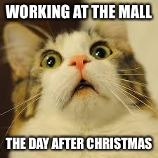 scared cat | WORKING AT THE MALL THE DAY AFTER CHRISTMAS | image tagged in scared cat | made w/ Imgflip meme maker