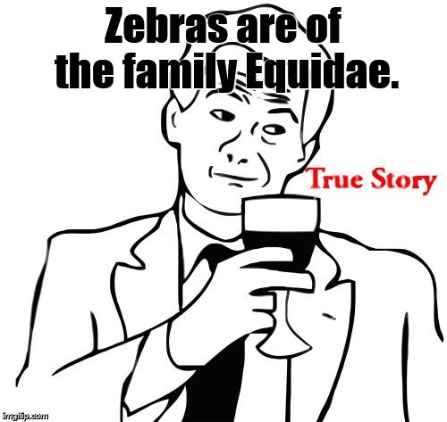 true story | Zebras are of the family Equidae. | image tagged in true story | made w/ Imgflip meme maker