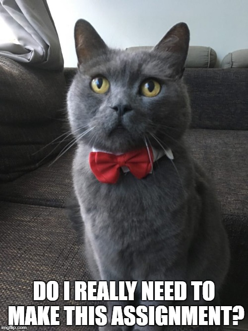 DO I REALLY NEED TO MAKE THIS ASSIGNMENT? | image tagged in cat | made w/ Imgflip meme maker