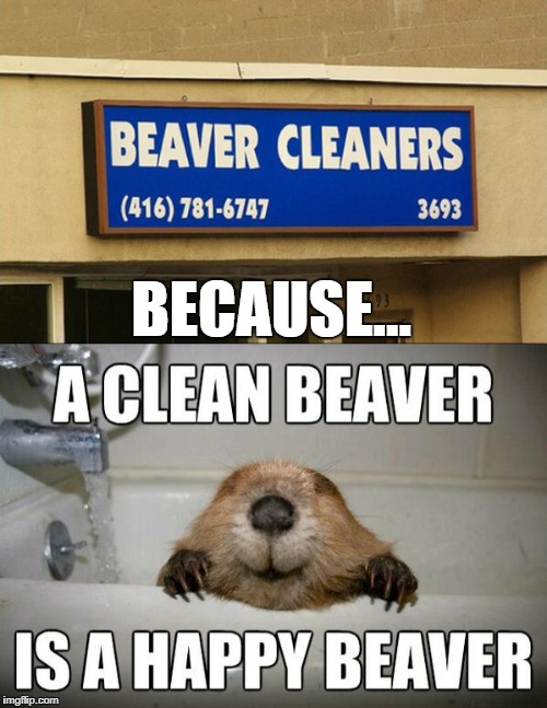 Clean yours today....Please!!! | BECAUSE... | image tagged in clean beaver,memes,funny signs,funny,beaver,animals | made w/ Imgflip meme maker