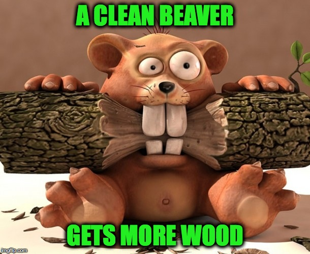 Beaver Bytes | A CLEAN BEAVER GETS MORE WOOD | image tagged in wood | made w/ Imgflip meme maker