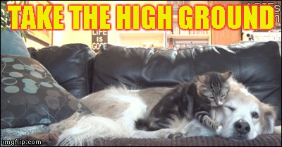 Cat Attack | TAKE THE HIGH GROUND | image tagged in memes,cat attack,take the high ground,dog,sleep | made w/ Imgflip meme maker
