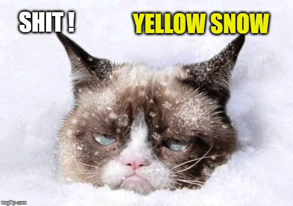Grumpy cat snow | SHIT ! YELLOW SNOW | image tagged in grumpy cat snow | made w/ Imgflip meme maker