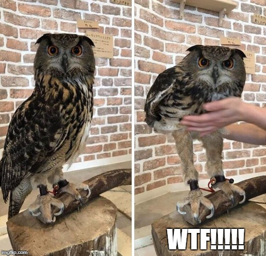 WTF!!!!! | image tagged in owls | made w/ Imgflip meme maker