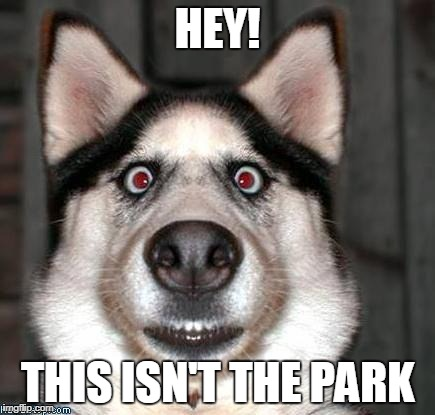 Tricked Into Going To The Vet | HEY! THIS ISN'T THE PARK | image tagged in scared dog,vet,sad dog,doggo | made w/ Imgflip meme maker