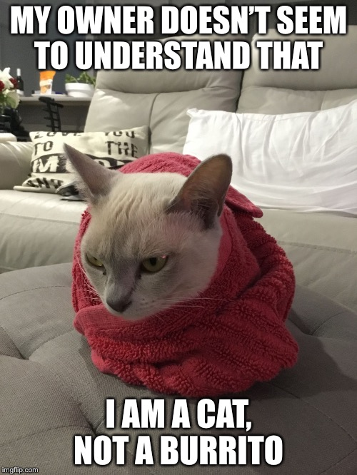 Burrito Cat | MY OWNER DOESN'T SEEM TO UNDERSTAND THAT I AM A CAT, NOT A BURRITO | image tagged in burrito cat,grumpy cat,cats,donald trump,gifs,funny | made w/ Imgflip meme maker