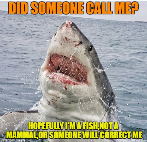 DID SOMEONE CALL ME? HOPEFULLY I'M A FISH,NOT A MAMMAL,OR SOMEONE WILL CORRECT ME | made w/ Imgflip meme maker
