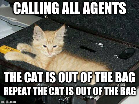 CALLING ALL AGENTS THE CAT IS OUT OF THE BAG REPEAT THE CAT IS OUT OF THE BAG | image tagged in cat,cat is out of the bag,agent,agents | made w/ Imgflip meme maker