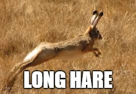 LONG HARE | made w/ Imgflip meme maker