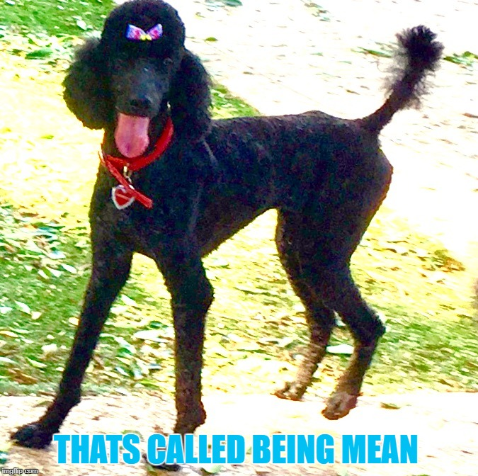 Not upvoting Marleys cute bow | THATS CALLED BEING MEAN | image tagged in marley poodle,standard,phoenix dog,doggy,funny meme | made w/ Imgflip meme maker