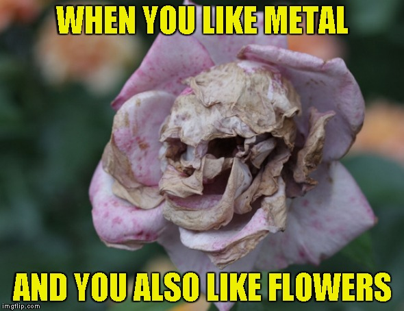 Now I finally know which flowers to give to my girlfriend............................................. when I find one.... | WHEN YOU LIKE METAL AND YOU ALSO LIKE FLOWERS | image tagged in memes,metal,powermetalhead,flowers,brutal,skull | made w/ Imgflip meme maker