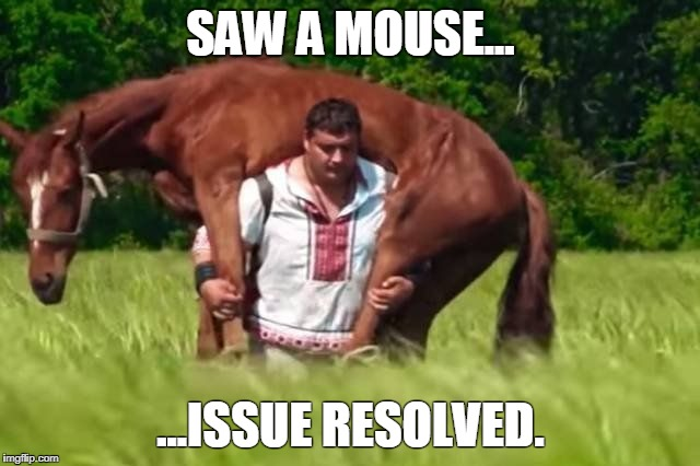 Horse rides you | SAW A MOUSE... ...ISSUE RESOLVED. | image tagged in horse rides you | made w/ Imgflip meme maker