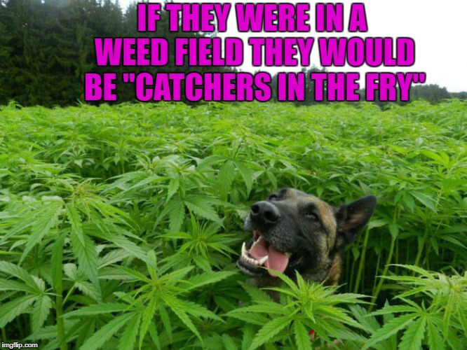 "IF THEY WERE IN A WEED FIELD THEY WOULD BE ""CATCHERS IN THE FRY"" 