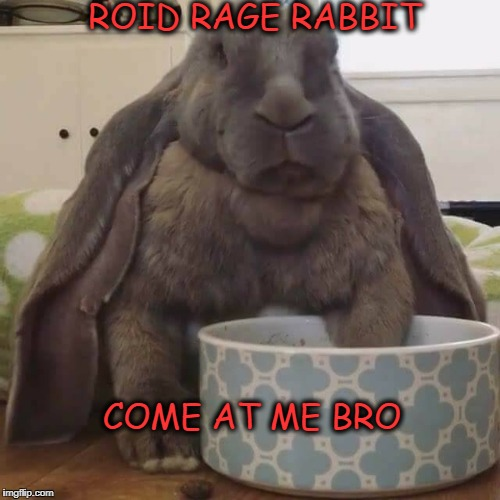Roid Rage Rabbit  | ROID RAGE RABBIT COME AT ME BRO | image tagged in roid rage rabbit,rabbit,steroids | made w/ Imgflip meme maker