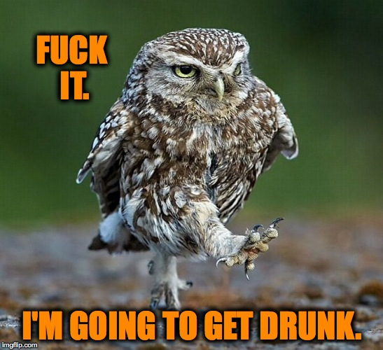 There Are Days .... | F**K IT. I'M GOING TO GET DRUNK. | image tagged in burrowing owl not happy | made w/ Imgflip meme maker