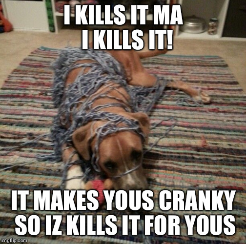 Furry Helper | I KILLS IT MA  I KILLS IT! IT MAKES YOUS CRANKY SO IZ KILLS IT FOR YOUS | image tagged in dogs,funny dogs,naughty | made w/ Imgflip meme maker