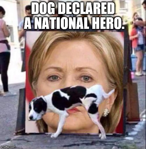 Dog Peeing On HIllary Clinton | DOG DECLARED A NATIONAL HERO. | image tagged in dog peeing on hillary clinton | made w/ Imgflip meme maker