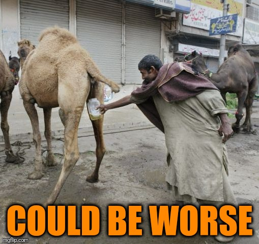Camel | COULD BE WORSE | image tagged in camel | made w/ Imgflip meme maker