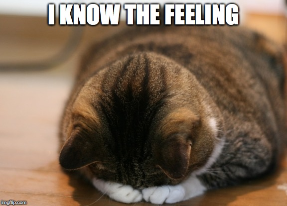 kittycat facepalm | I KNOW THE FEELING | image tagged in kittycat facepalm | made w/ Imgflip meme maker