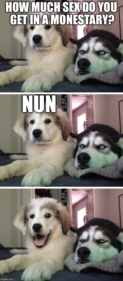 Bad pun dogs | HOW MUCH SEX DO YOU GET IN A MONESTARY? NUN | image tagged in bad pun dogs,memes | made w/ Imgflip meme maker